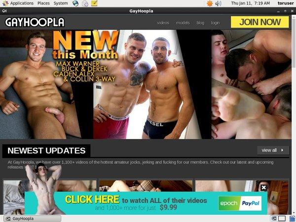 Gay Hoopla New